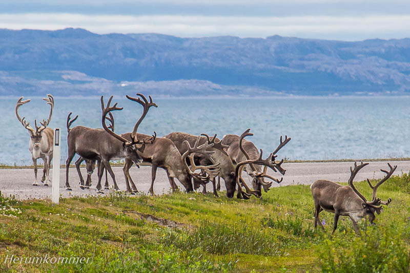 RP_2012_08_12_Varangerhalvøya_039