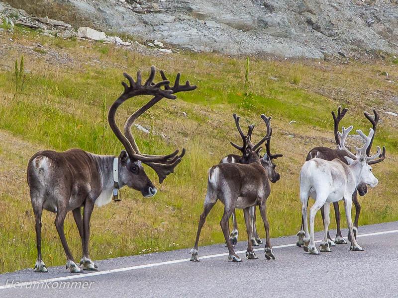 rp_2012_08_14_altafjord_032